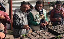 Greenhouse Programs